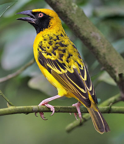 Male village weaver, photo by Doug Janson